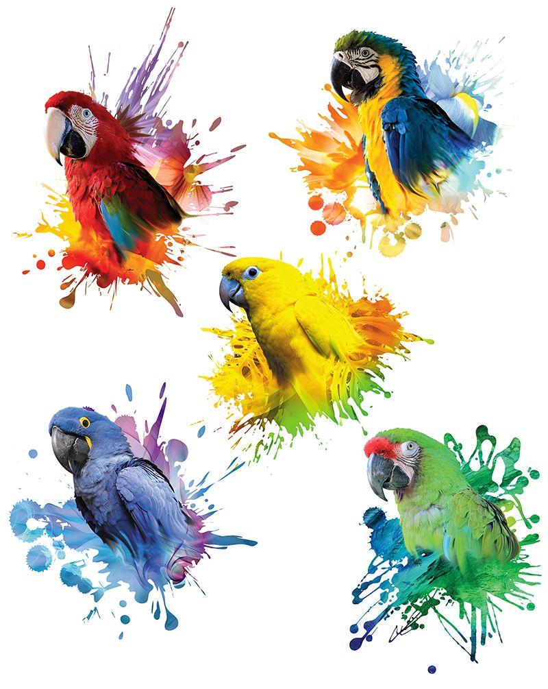 Estampas - Arara-Vermelha (Ara chloropterus), Arara-Canindé (Ara ararauna), Arara-Azul (Anodorhynchus hyacinthinus), Ararajuba (Aratinga guarouba) e Arara-Militar (Ara m. milytaris)