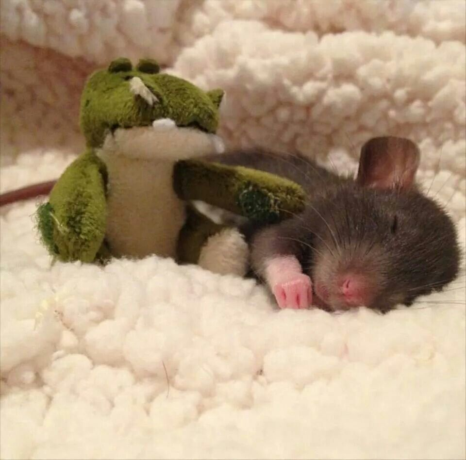 Awww! I really need to get my ratties some tiny stuffed animals so I can take pictures like this haha.