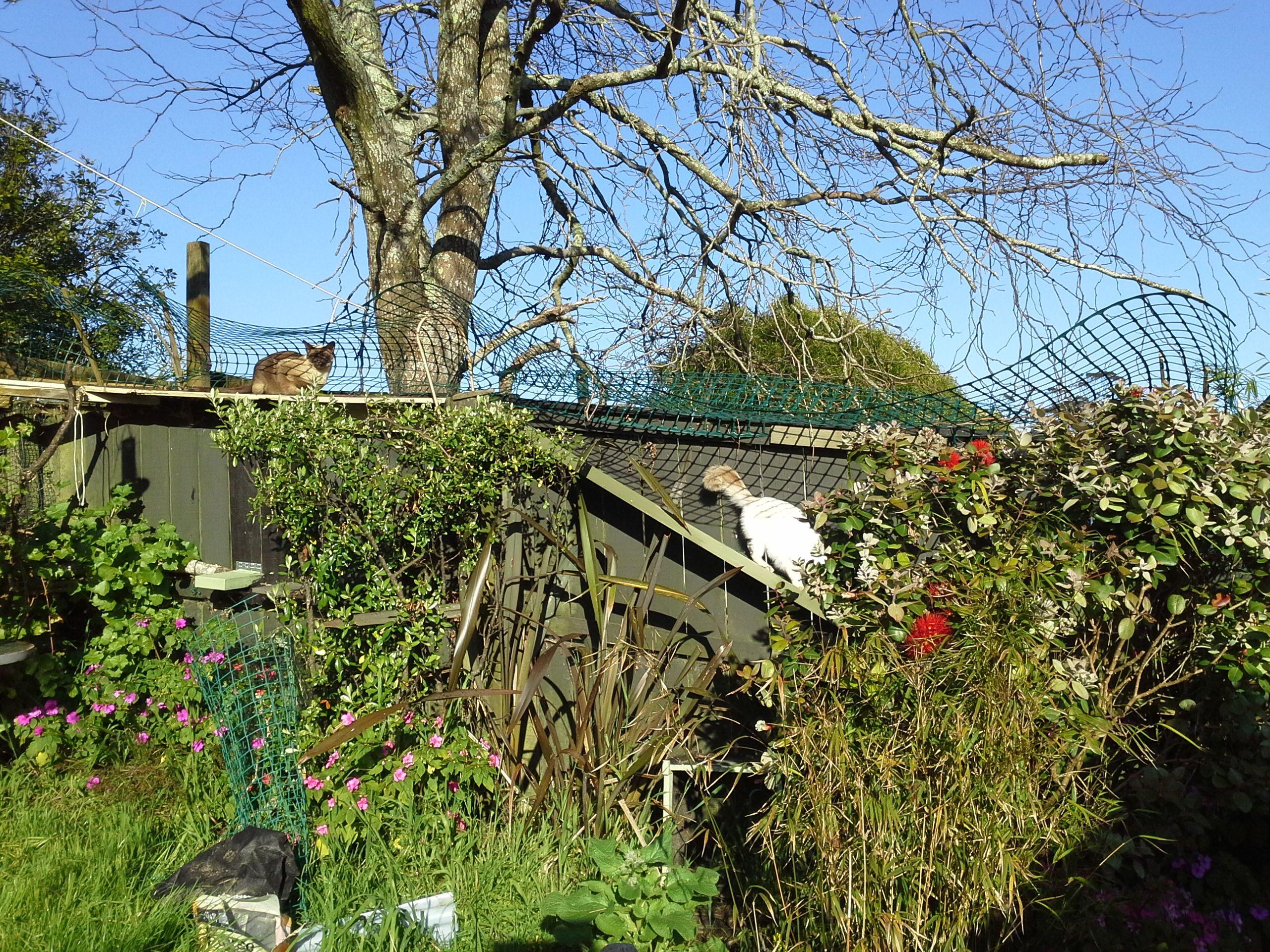 Diy catproof fencing and backyard playground backyard