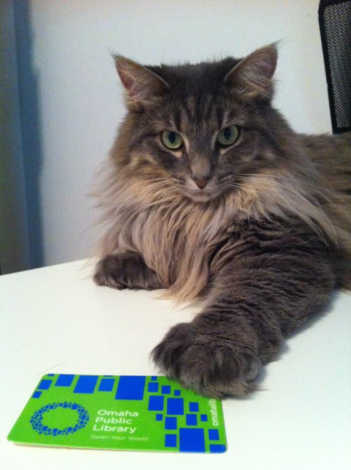 This Omaha feline takes his library very seriously!