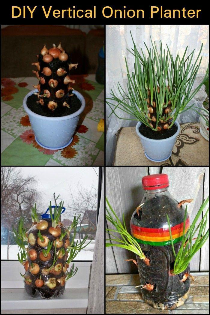 Diy Vertical Onion Planter Vertical Vegetable Gardens 400 x 300