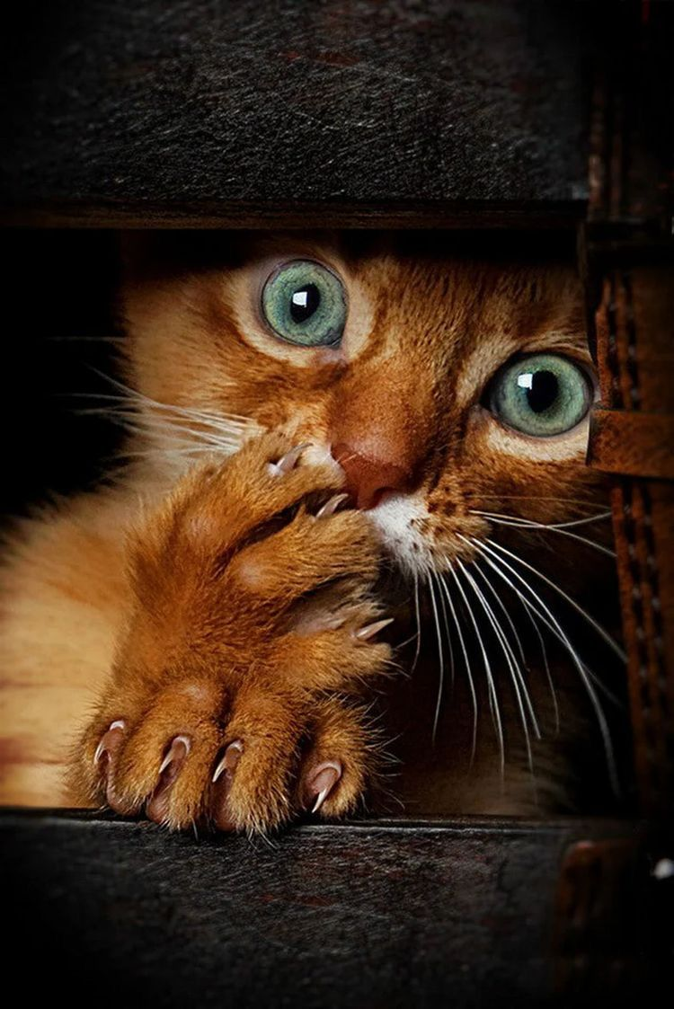 Funny Animals Image By On Animals In 2020 Beautiful Cats Shocked Cat