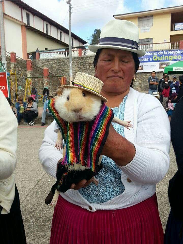 Competencia de el mejor cuy vestido! Sólo en Ecuador!  d68c4cd5e9b