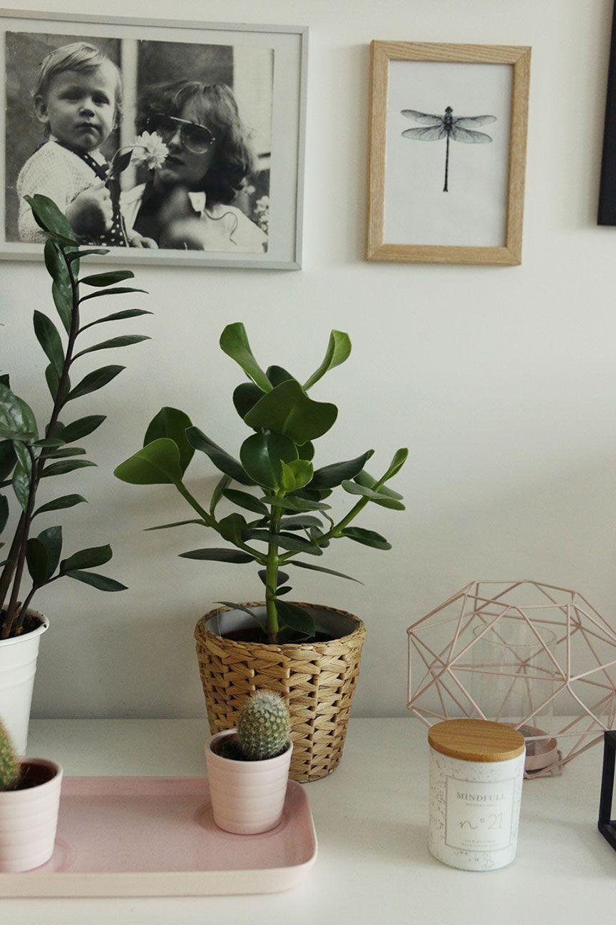Nasze Rosliny Doniczkowe Czyli Troche Juz Umiem W Zielone Mrspolkadot Green Flowers Flowers Plants