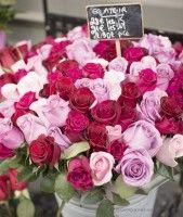 Roses in Saint Germain