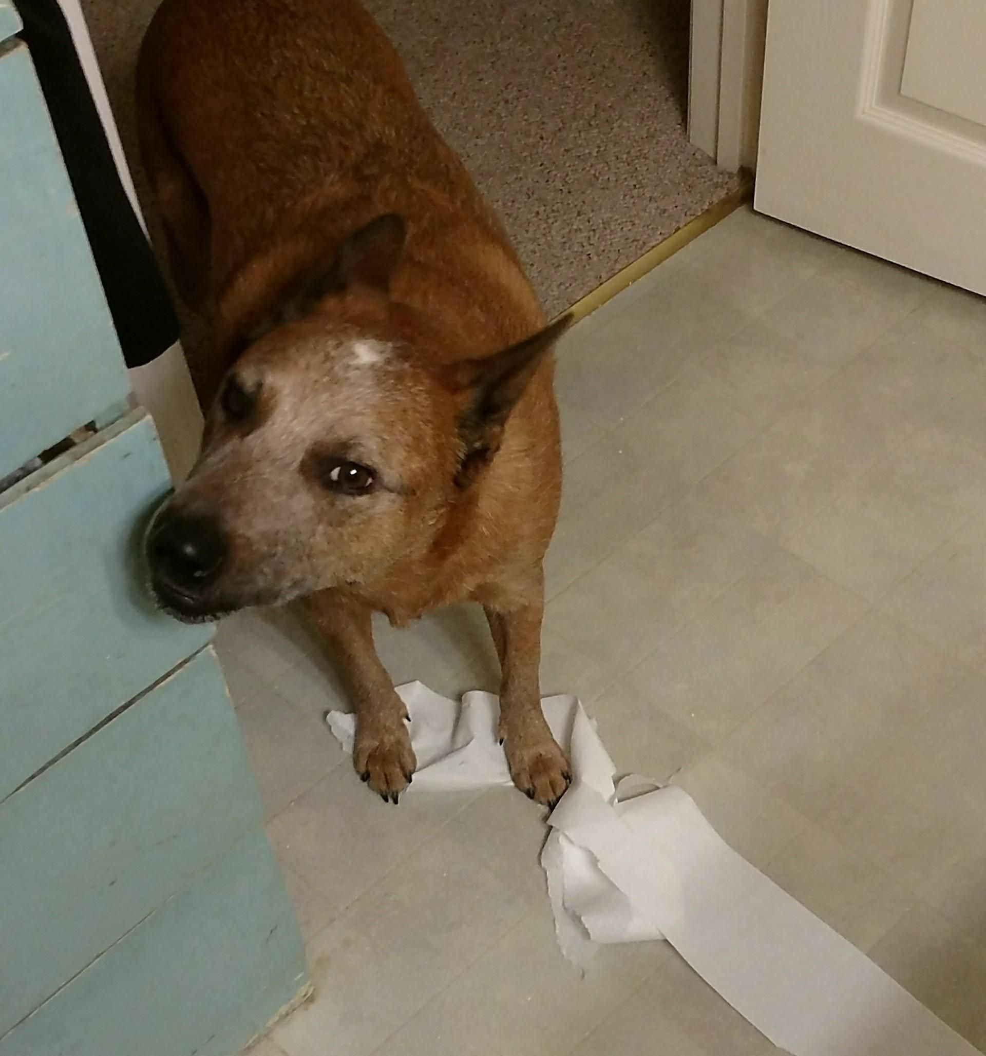 I have no idea who unrolled all the toilet paper http