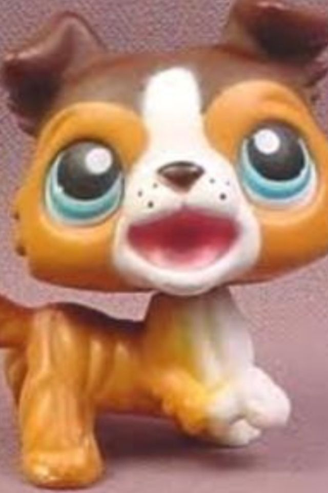Collie With Mouth Open Dogs And Puppies Collie Puppies Littlest Pet Shop