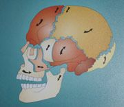 Chiropraktik Schaedel