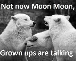 Grown-ups are talking, Moon Moon!