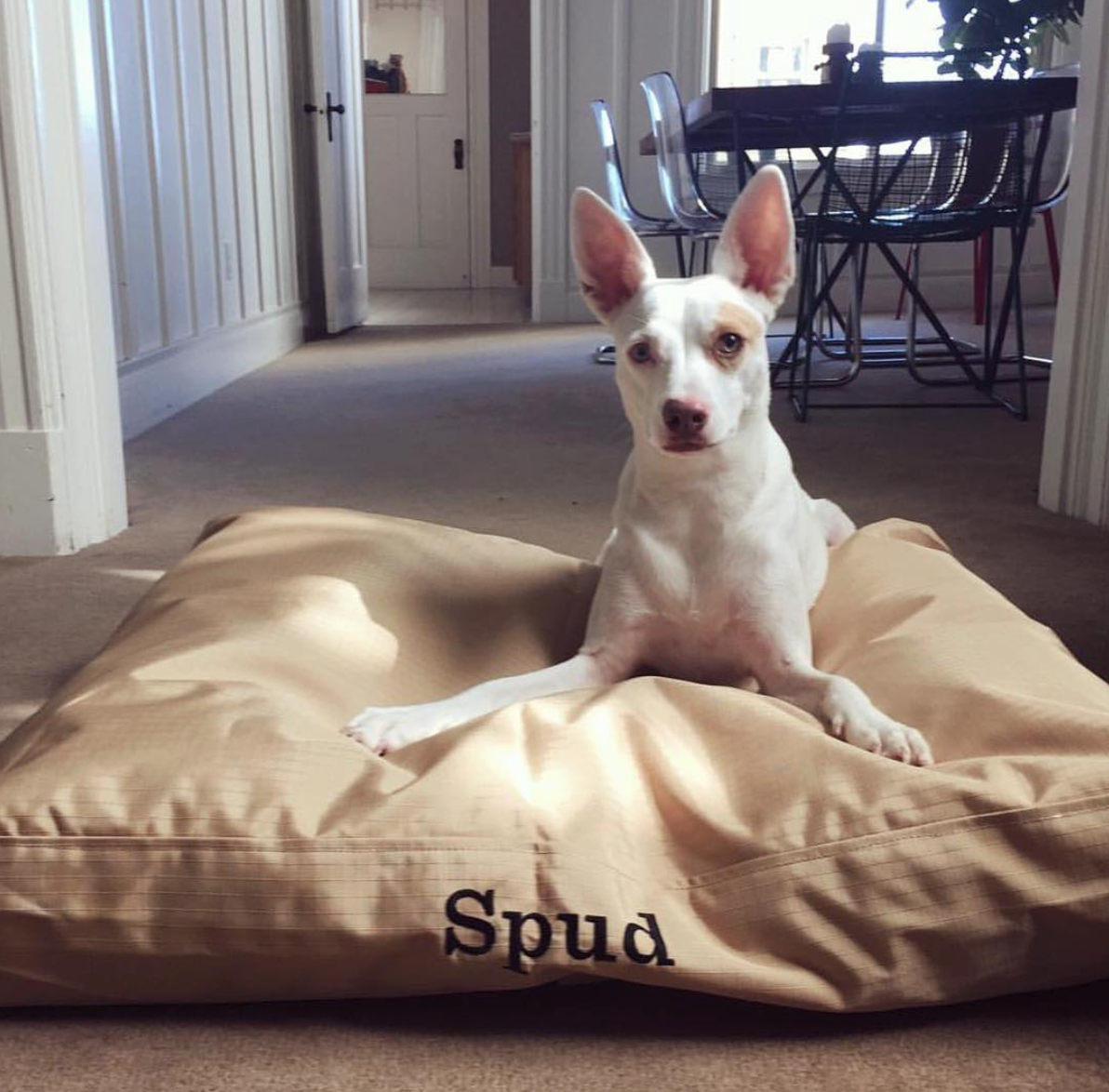 Tough Rectangle Nesting Dog Bed™ Dogs, Dog bed, Your dog