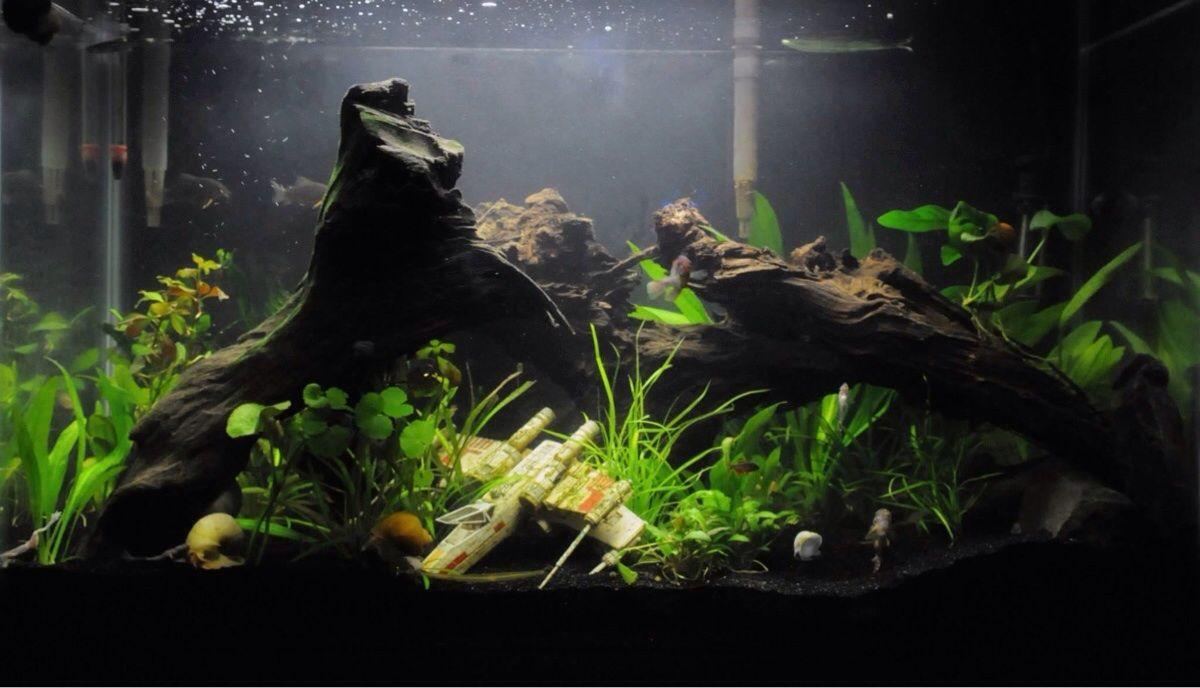 Want To Do A Star Wars Themed Tank Fish Tank Themes Cool Fish Tanks Fish Tank