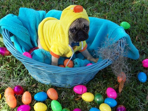 Easter Puggy