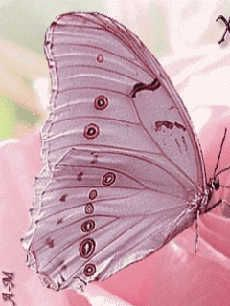 BELLA COUTURE ®FINE JEWELRY of BEVERLY HILLS, CA - http://www.bellacouture.com/ - Lovely butterfly in nature with flowers - pink butterfly