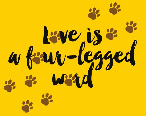 Repin if your four-legged companion defines the word #Love for you! #OurPets #LoveYourPetDay #Ecard