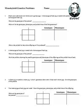 monohybrid cross worksheet genetics worksheets and students. Black Bedroom Furniture Sets. Home Design Ideas