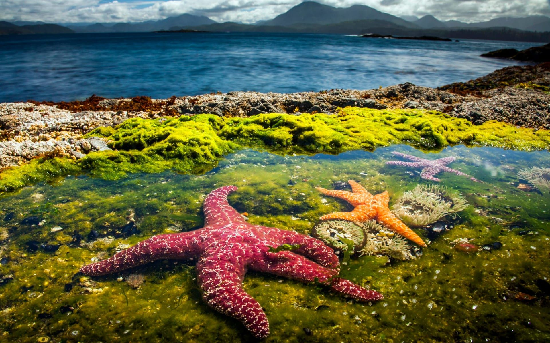 Blue Planet Ii Highlights Of The Spectacular Bbc Natural