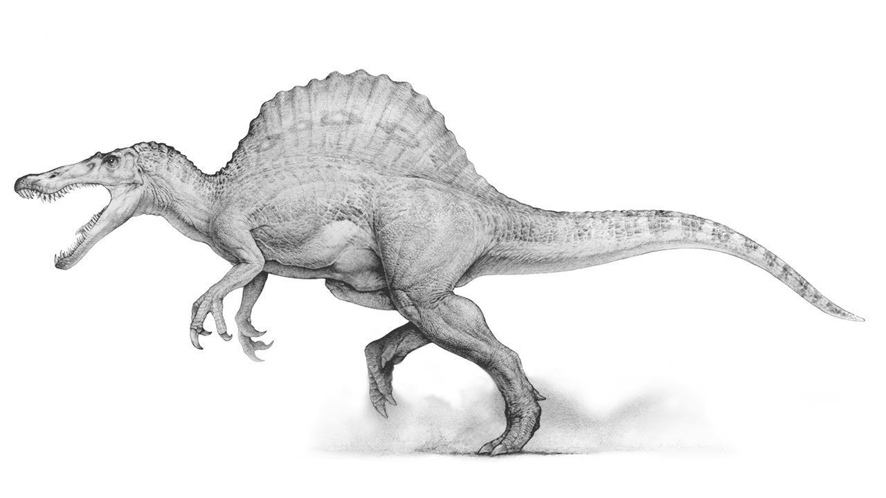 Dinosaur Coloring Pages Giganotosaurus Spinosaurus Dinosaur Sketch Dinosaur