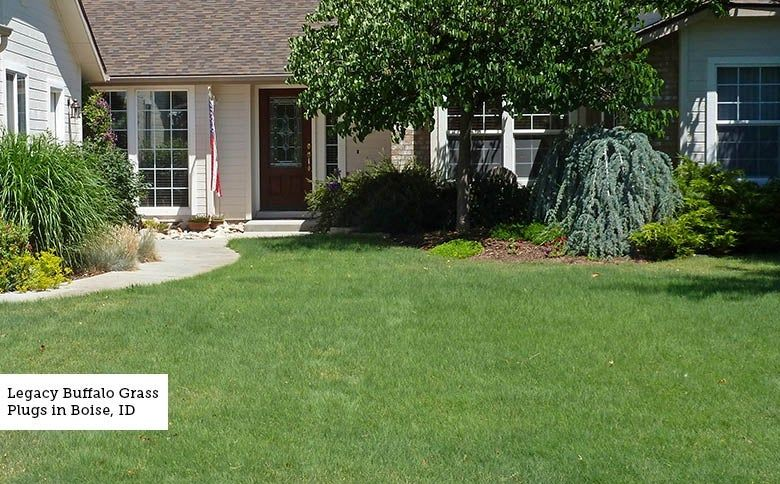 Lawn Replacement Instructions A Step By Step Guide