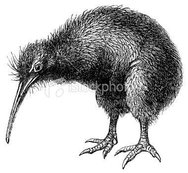 34++ Kiwi bird clipart black and white ideas