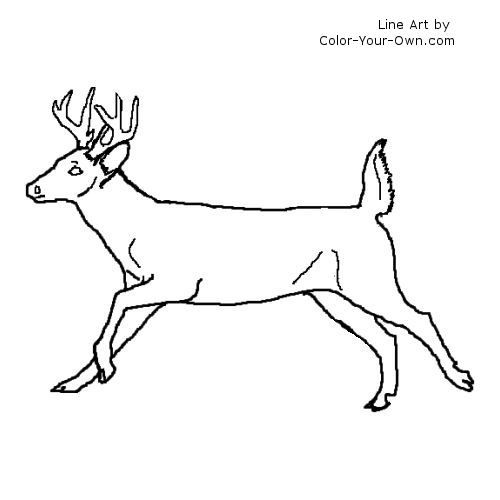 Whitetail Buck In A Hurry Line Art Whitetail Bucks Whitetail