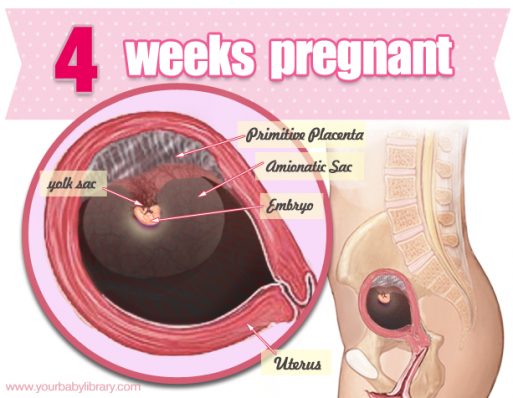 Hopefully While 4 Weeks Pregnant You Are In The Know Its