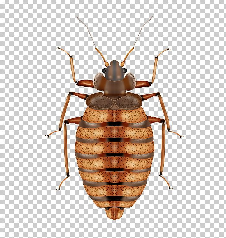 Insect Mosquito Bed Bug Control Techniques Pest Control