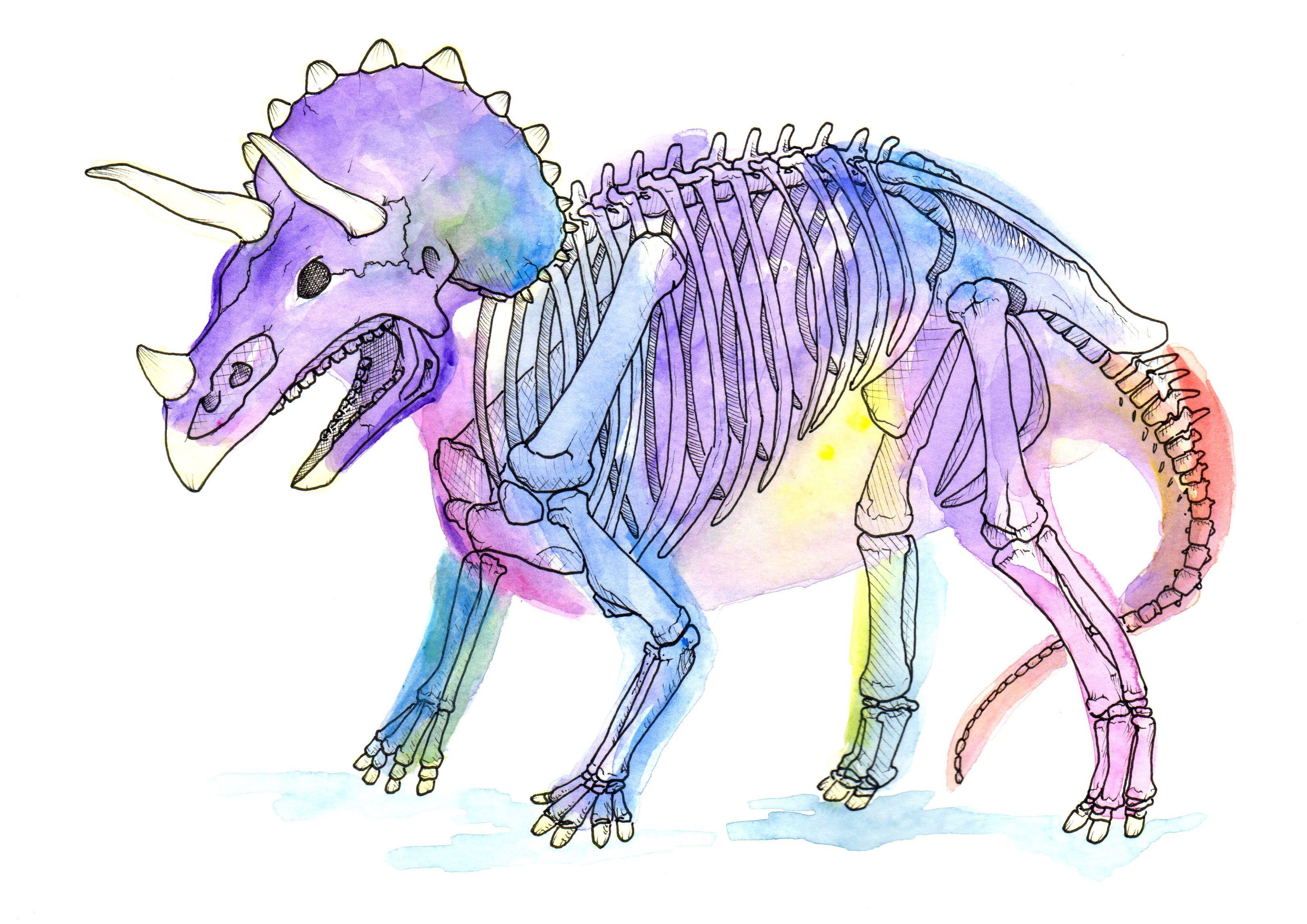 X-RAY Dinosaurs and Other Prehistoric Creatures - Paperback #prehistoriccreatures Triceratops original watercolor, signed by artist. 9 x 12. This illustration was originally created for the book X-Ray Dinosaurs and Other Prehistoric Creatures. #prehistoriccreatures