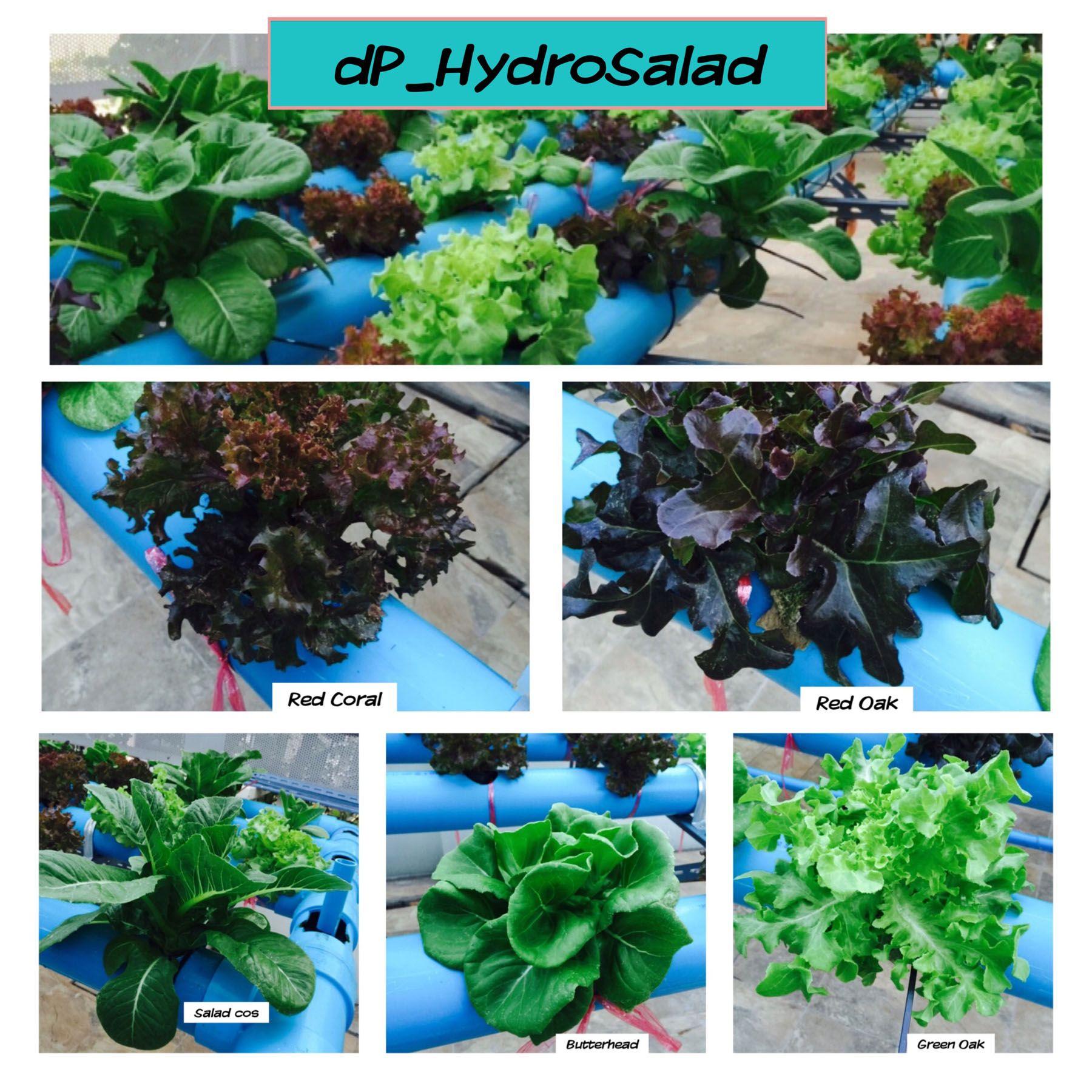 Erkunde Salat Pflanze und noch mehr
