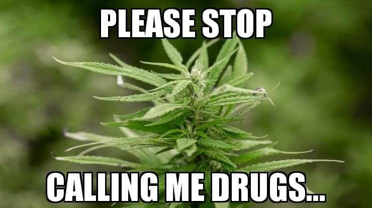 Pin On Cannabis Life