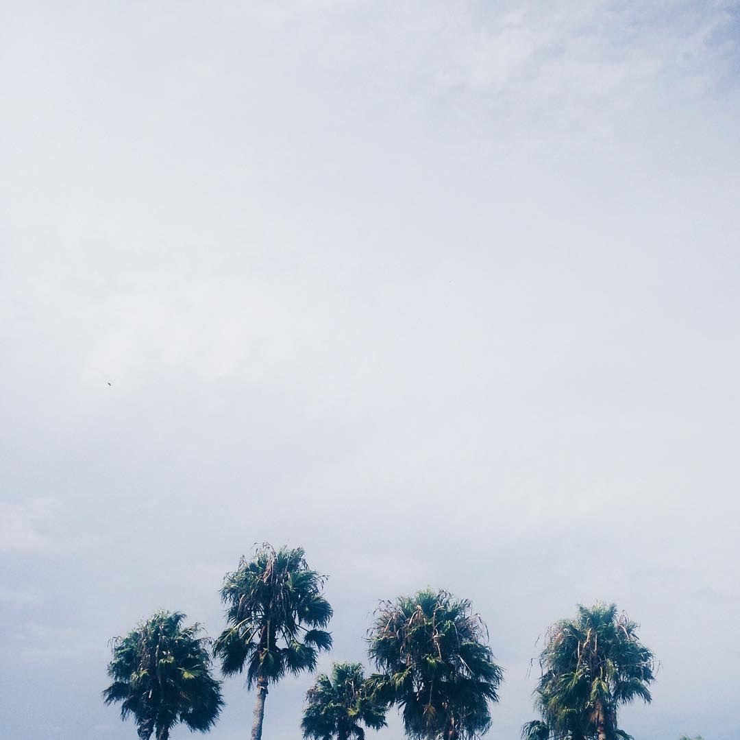 The Palms  #palms #vsco_lover #skyzone #balmy #tropicana #myperspective