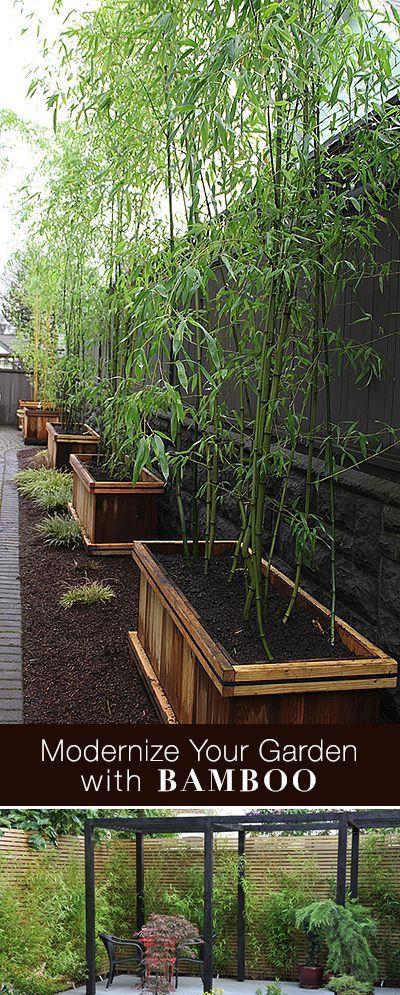 Modernize Your Garden With Bamboo | Jardinería, Bambú y Huerta