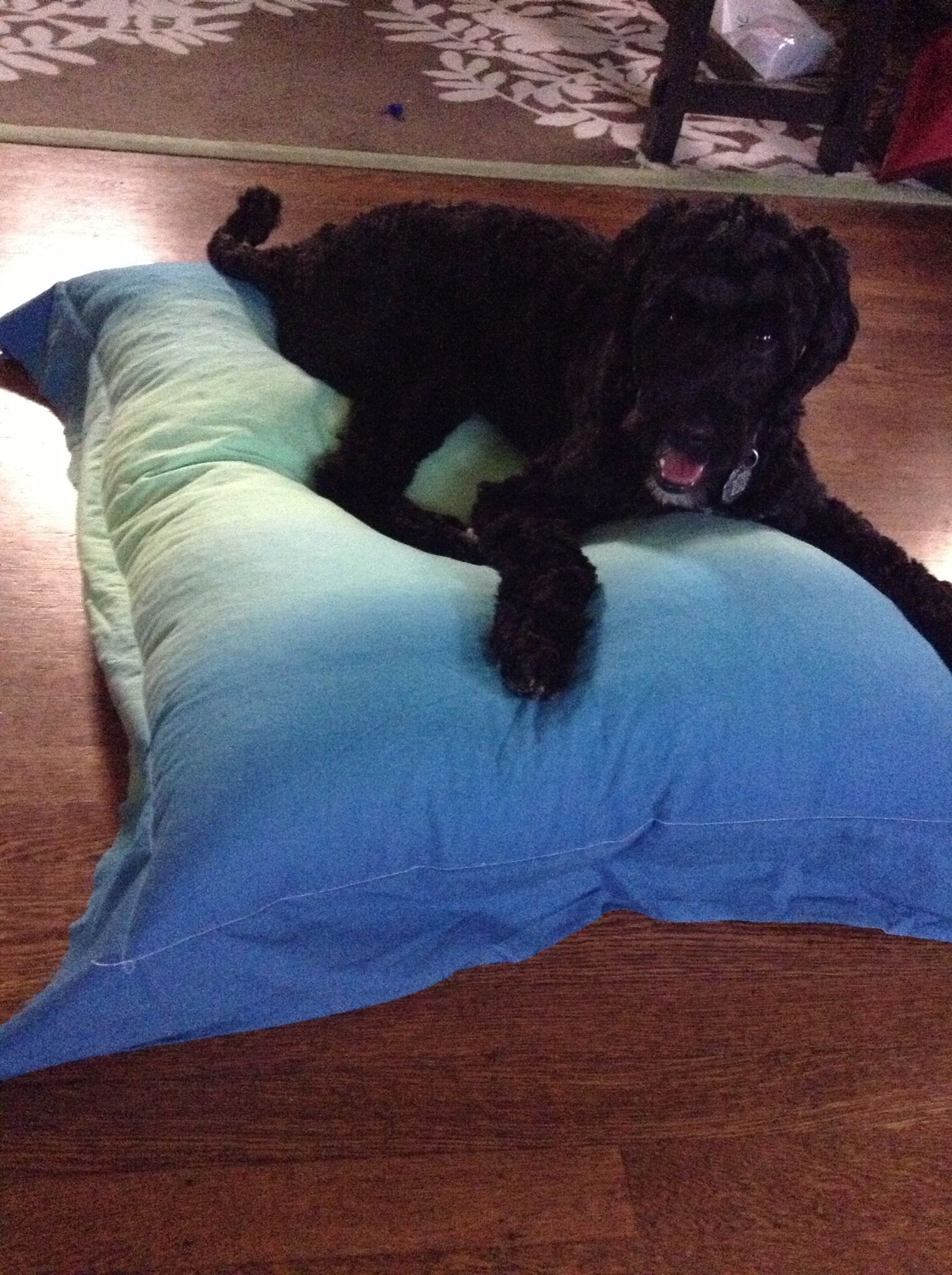 How to Make a Dog Bed Recipe Dog beds and Dog