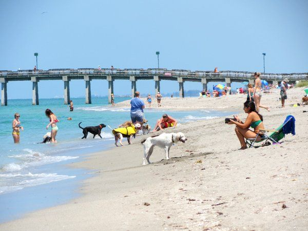 Venice Florida Dog Beach Park