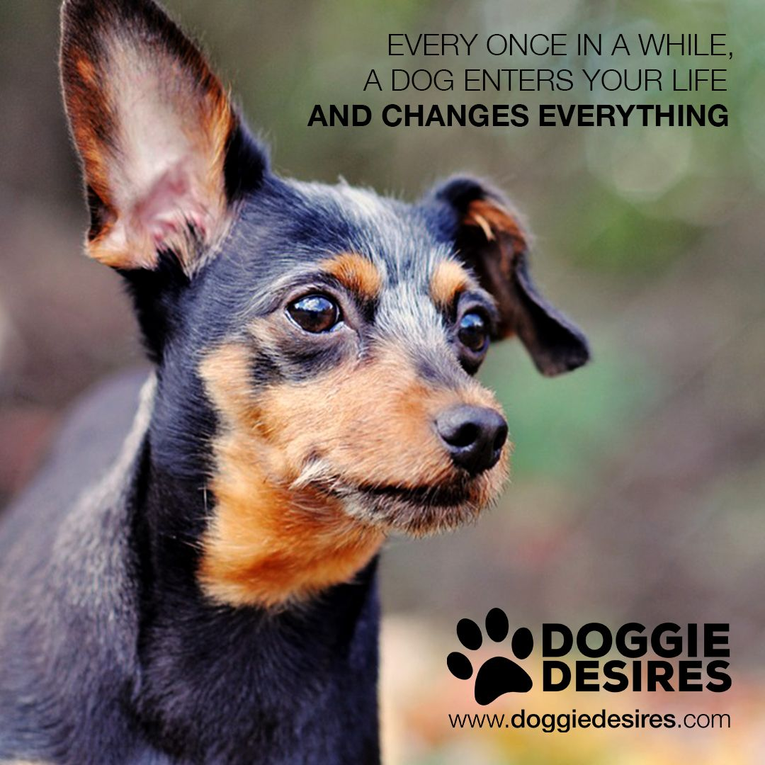 Dogs can change everything doggy