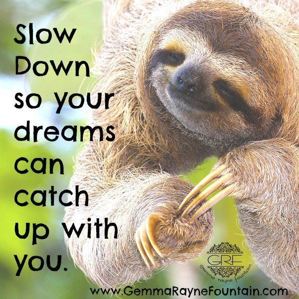 "Gemma Rayne Fountain on Twitter: ""#slowdown #bethechange #healthcoach #sloth #dreams #life #selfcare #truedat https://t.co/oFh2IwdGMw"""