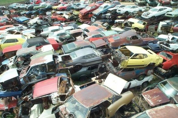 World S Largest Ford Mustang Salvage Yard Mustang Abandoned Cars Mustang Fastback