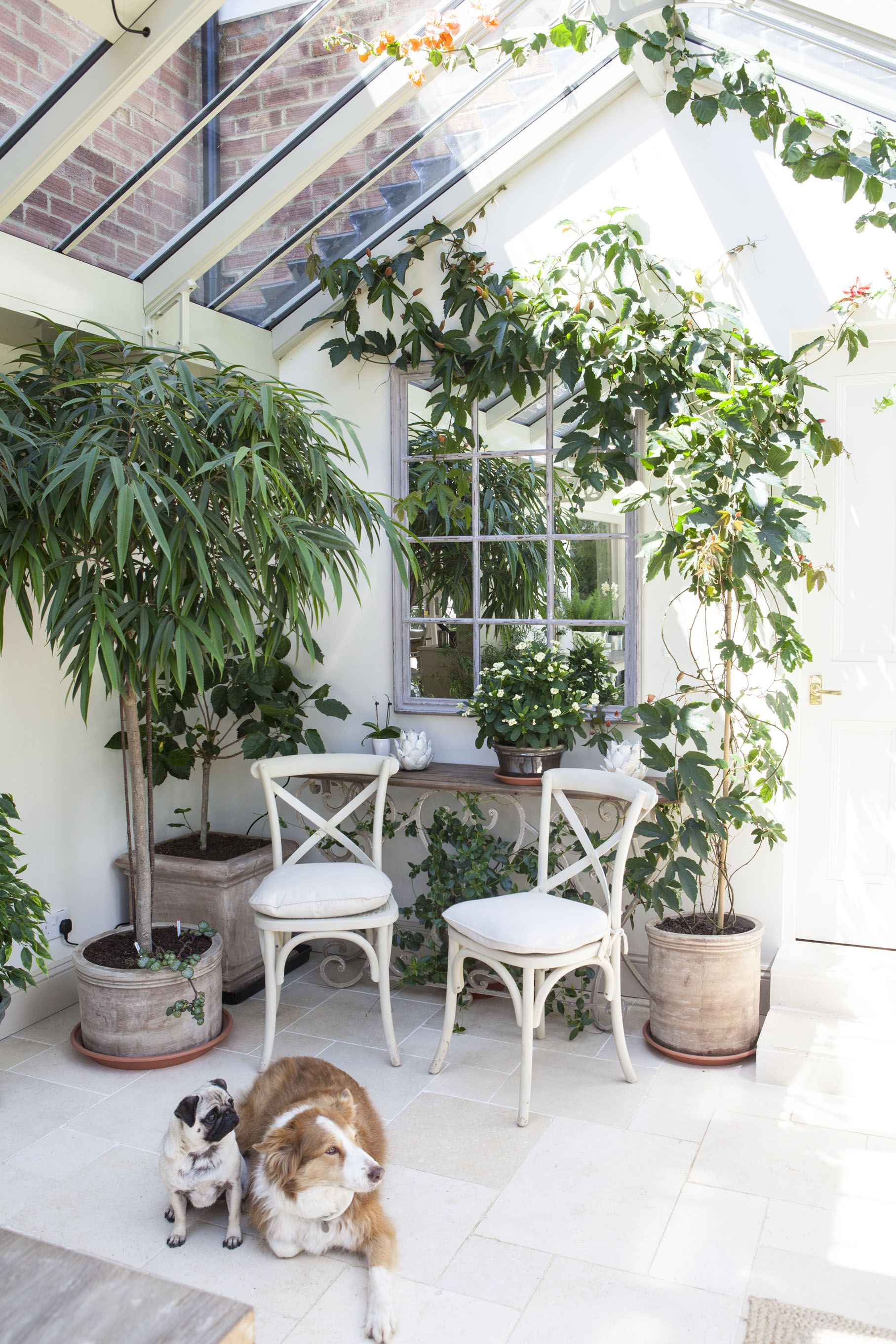 Lovely home for happy pug and collie. A wonderful sunny plant conservatory. www.alitex.co.uk