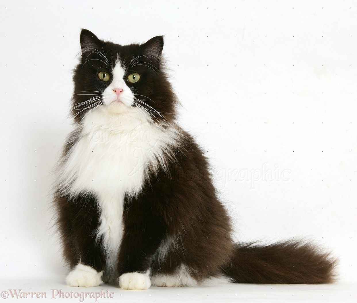 Image Result For Black And White Cat Miscellaneous