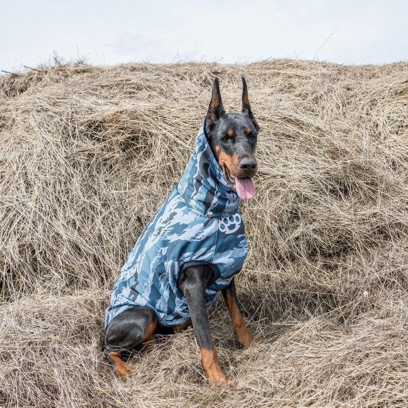 8e2f4722f387b Blue camo coat for Doberman Blue Doberman, Dog Winter Coat, Winter Hats,  Winter