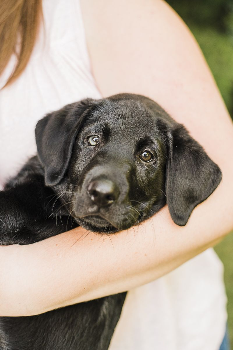 Puppy Love Watson the Black Lab's Home Session