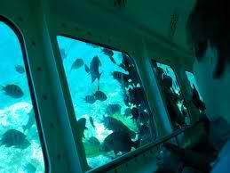 Glass Bottom Boat Rides In The Grand Bahama S Beautiful Bahamas Vacation Glass Bottom Boat Vacation Trips