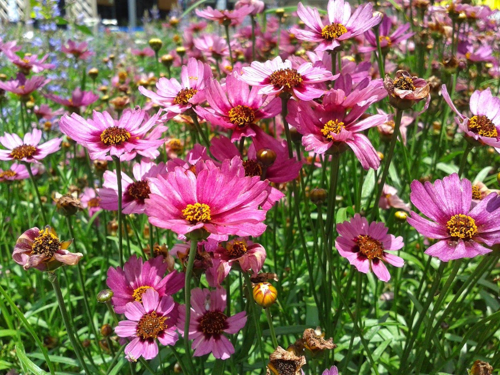 Pinks And Lilies Fair Flowers Of Promise Encouragement