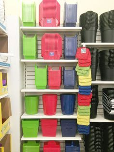 Dollar Tree Organization