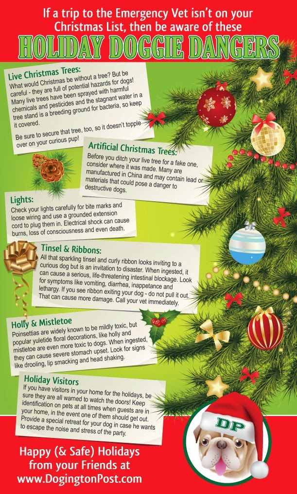 Holiday Dangers For Dogs With Images Doggy Christmas Dog