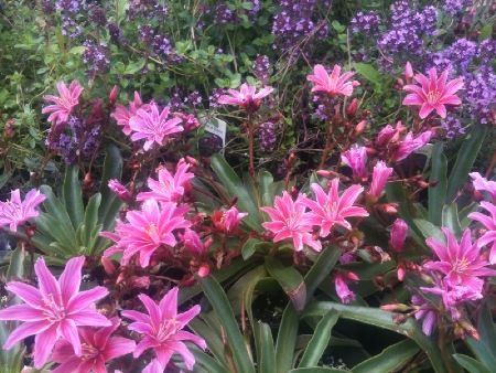 Find This Pin And More On Gardening That I Love Perennial Flowers
