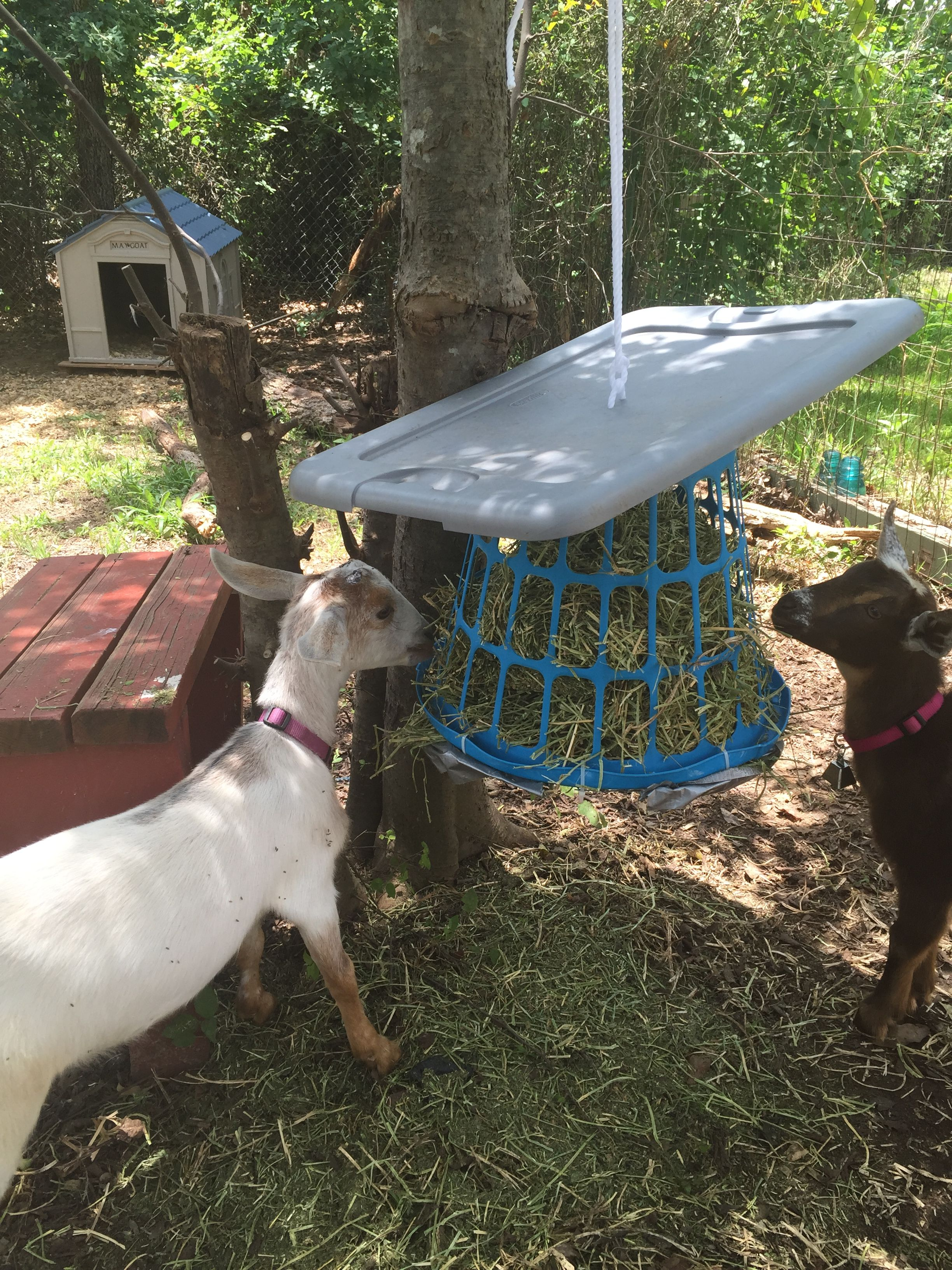 in feeder bale of portable good img ranch sitting shelter the round tag goat hay goats life for shade feeders
