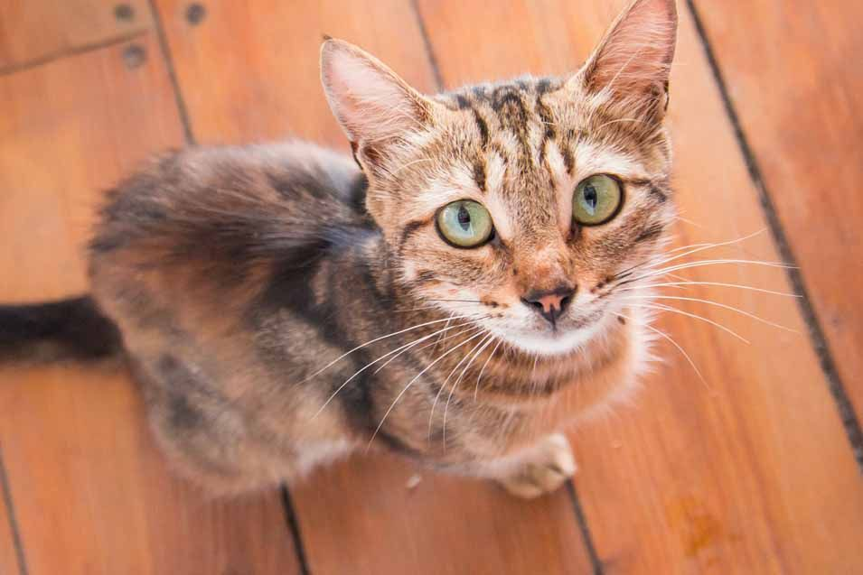 Symptoms That Your Cat Has Worms Cats Cats And Kittens Feline