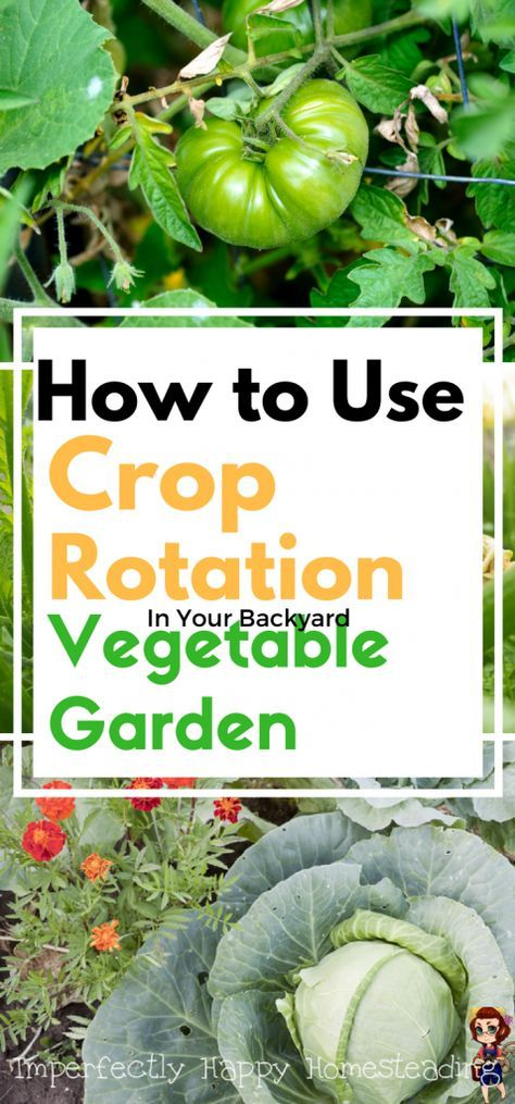 How to Use Crop Rotation in Your Backyard Vegetable Garden - healthier garden, bigger harvests!: