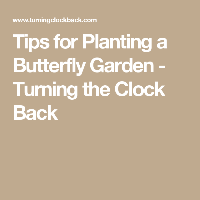 Tips for Planting a Butterfly Garden - Turning the Clock Back