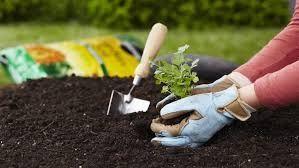 Graben, säen und wachsen!#graben #säen #und #wachsen
